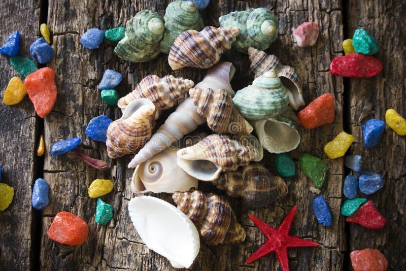 Conchas do mar, shell, moluscos com pedras coloridas em um de madeira fotografia de stock royalty free