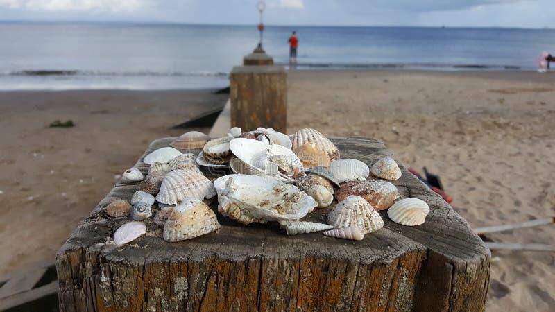 Conchas marinas fotografía de archivo libre de regalías