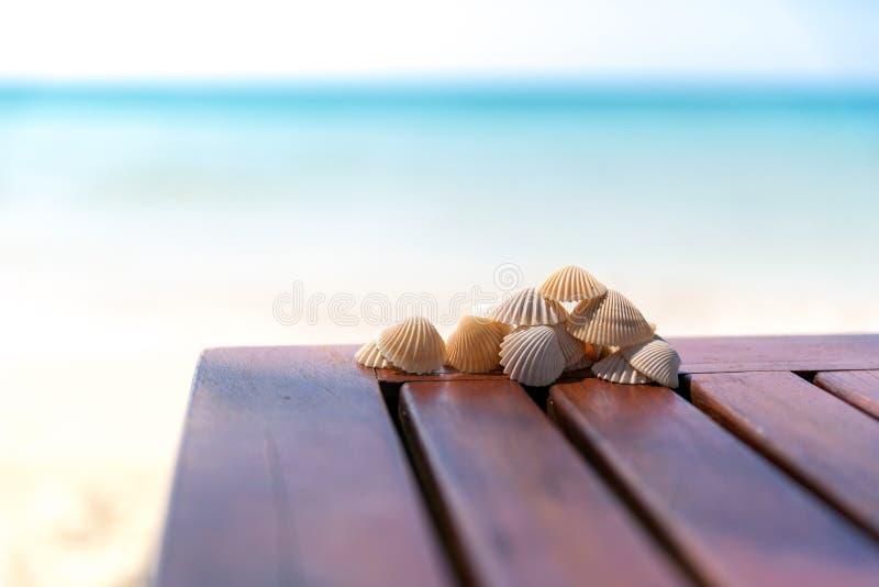 Conchas marinas imagen de archivo