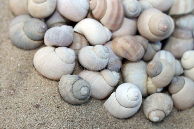 Conchas marinas fotos de archivo