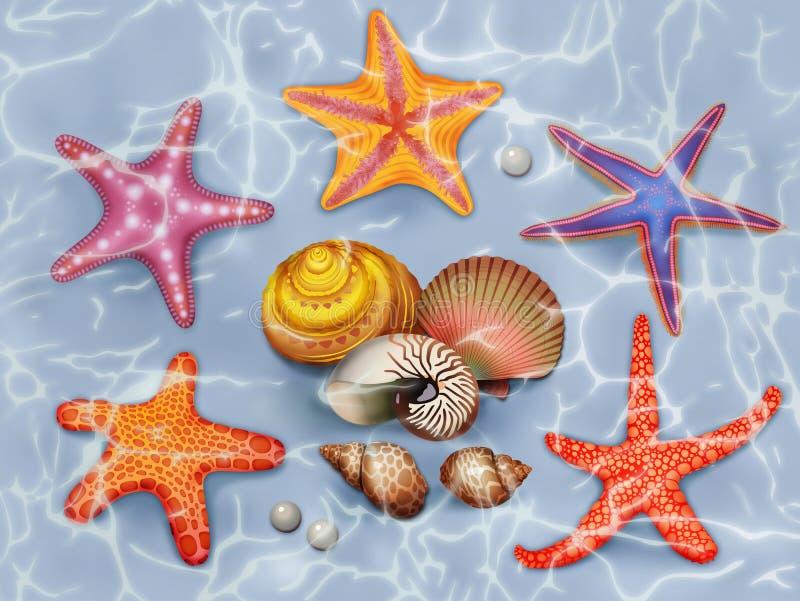Conchas marinas stock de ilustración