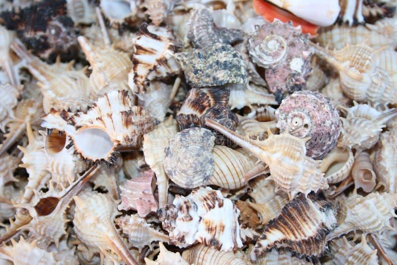 Conchas marinas foto de archivo
