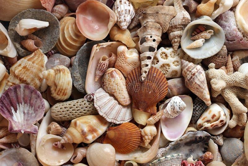 Conchas marinas fotos de archivo libres de regalías