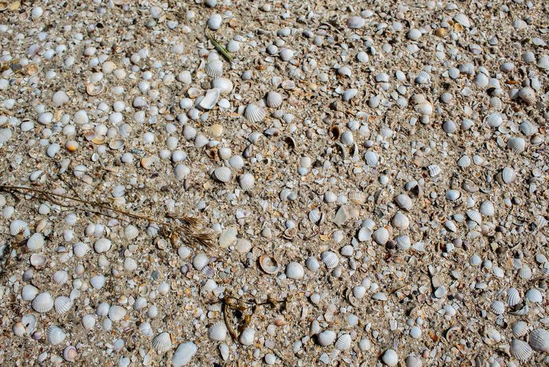 Conchas marinas de los diversos colores y tamaños, mentira en la arena imágenes de archivo libres de regalías