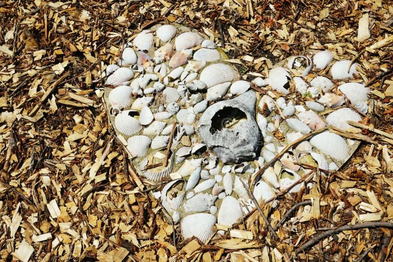 Conchas marinas del amor foto de archivo