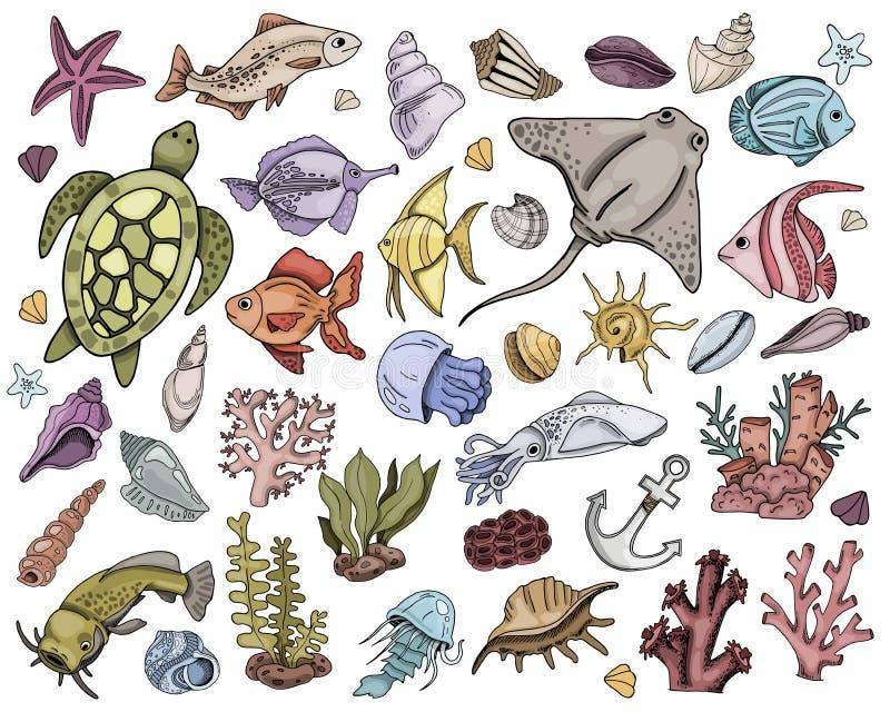 Conchas marinas del vector fijadas ilustración del vector