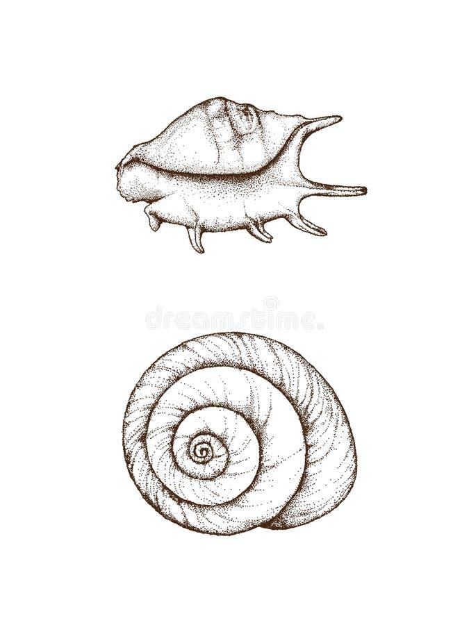 Conchas marinas dibujadas mano fotos de archivo libres de regalías