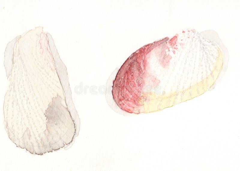 Conchas marinas en acuarela foto de archivo libre de regalías