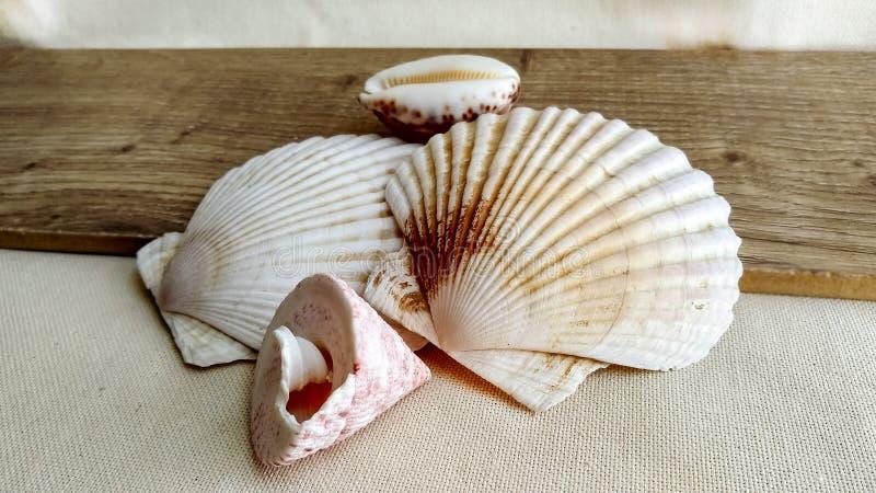 Conchas marinas en el fondo de madera foto de archivo