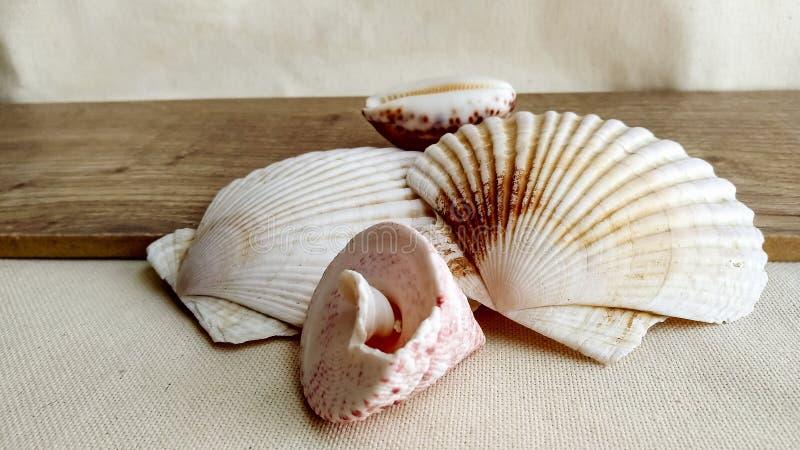 Conchas marinas en el fondo de madera fotografía de archivo libre de regalías