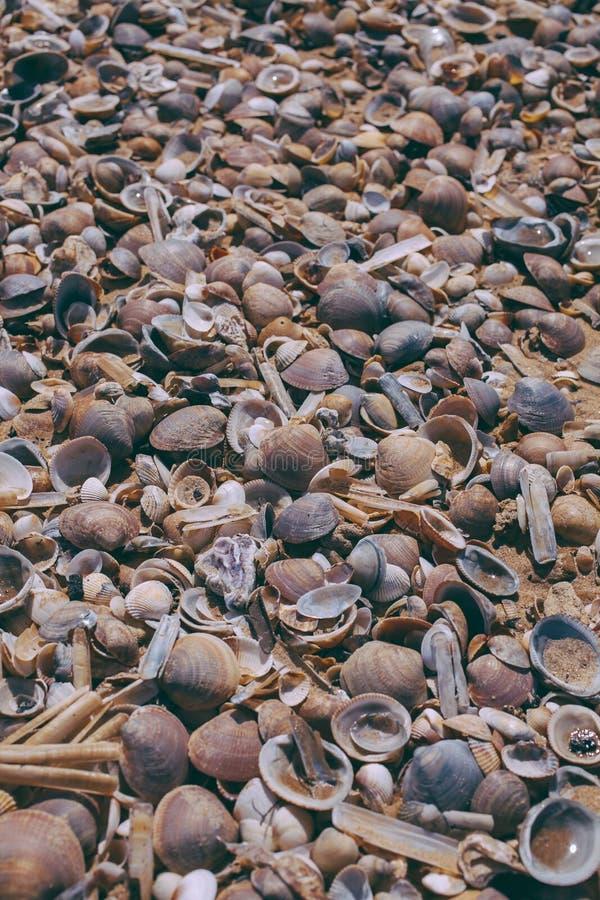 Conchas marinas en fondo de la arena Vista macra de muchas diversas conchas marinas como fondo Conchas marinas llenadas juntas en foto de archivo libre de regalías