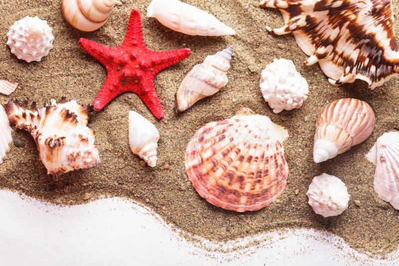 Download Conchas Marinas En La Arena Foto de archivo - Imagen de océano, seashell: 41920660
