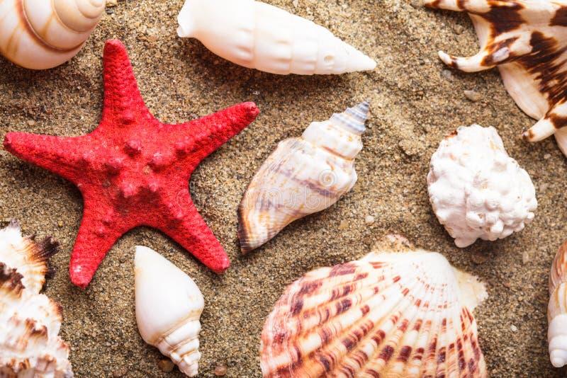 Download Conchas Marinas En La Arena Imagen de archivo - Imagen de holiday, verano: 41920709