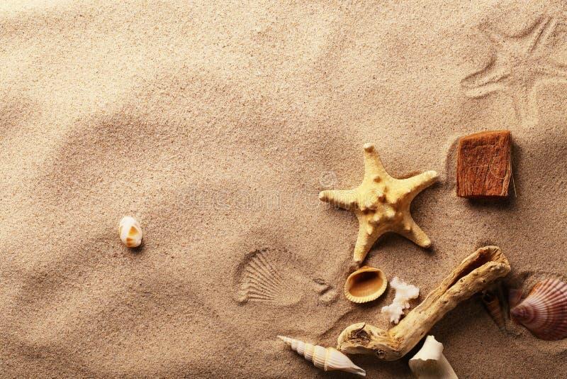 Conchas marinas en la playa de la arena fotografía de archivo libre de regalías