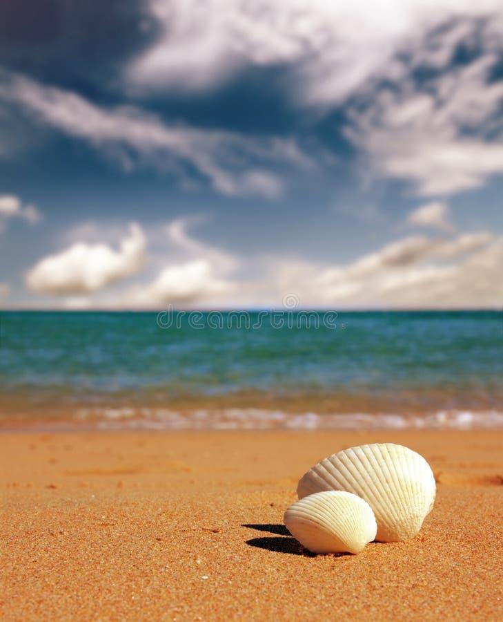 Conchas marinas en la playa - estilo retro del vintage imágenes de archivo libres de regalías