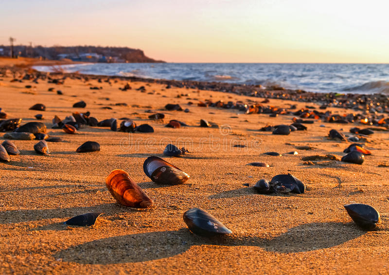 Conchas marinas en la playa por la mañana imagen de archivo