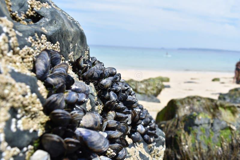 Conchas marinas en la roca imágenes de archivo libres de regalías