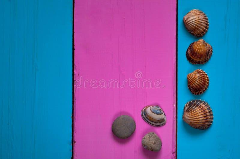 Conchas marinas en un fondo coloreado, marco y un fondo apacible para escribir un texto imagenes de archivo