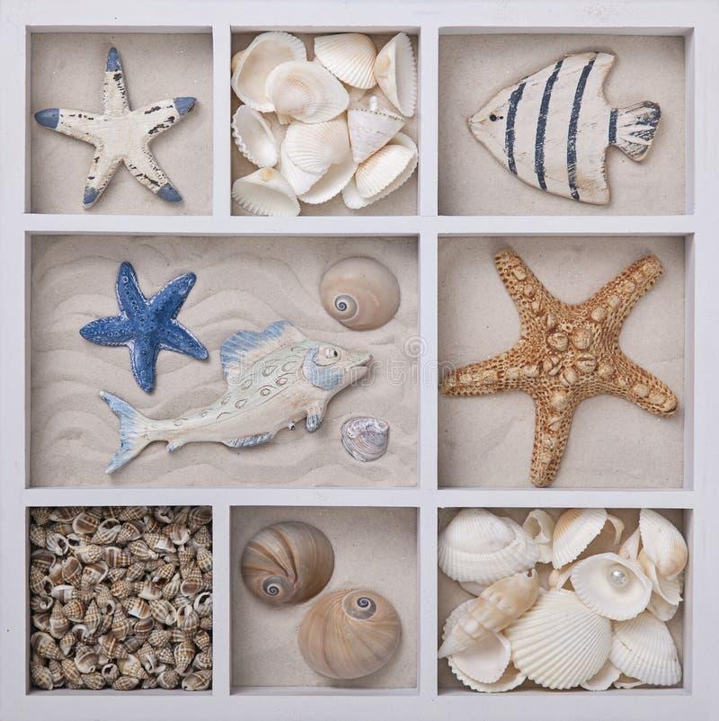 Conchas marinas en una caja blanca foto de archivo