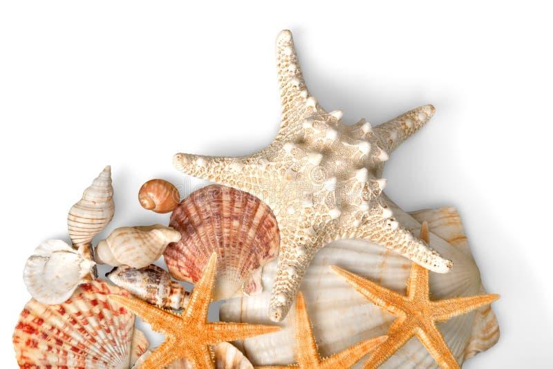 Conchas marinas hermosas y estrellas de mar aisladas encendido imagenes de archivo