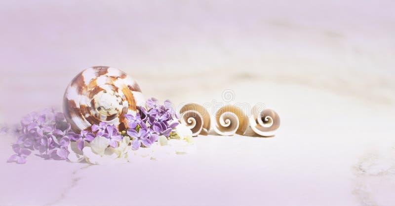 Conchas marinas, lila y pequeñas flores blancas en una neblina púrpura en fondo del travertino fotos de archivo libres de regalías