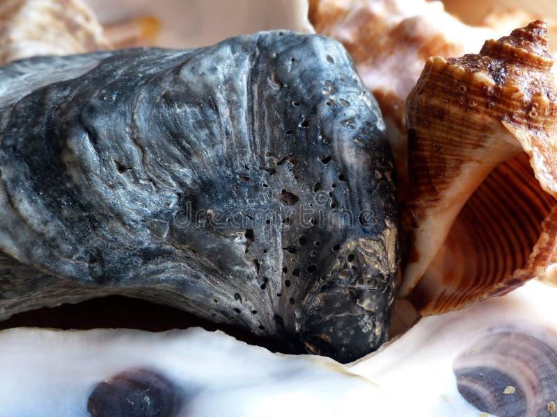 Conchas marinas primer Recordar verano En la práctica de Feng Shui - la concha marina es el símbolo de la buena suerte en negocio fotos de archivo libres de regalías