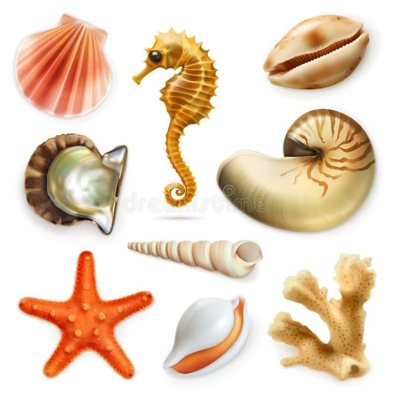 Conchas marinas, sistema del icono del vector stock de ilustración