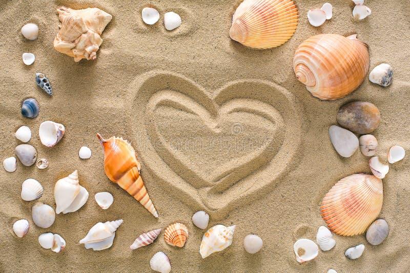 Conchas marinas y fondo de los guijarros, piedras naturales de la costa foto de archivo