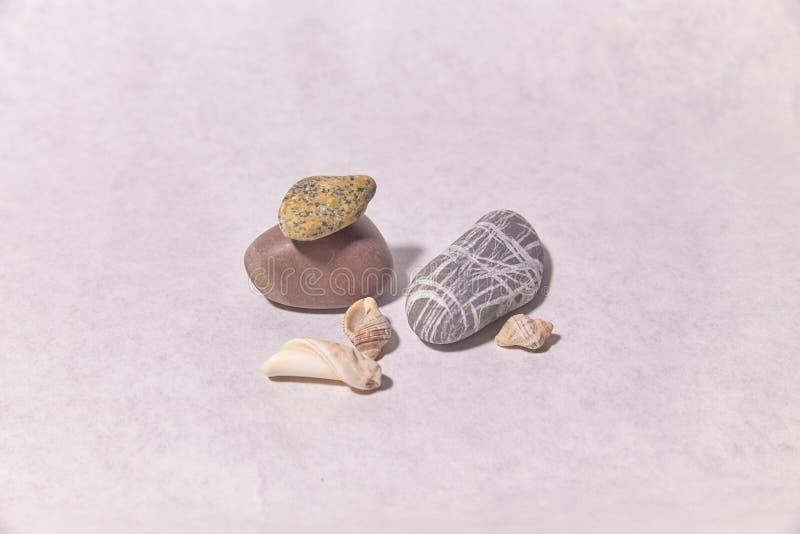 Conchas marinas y piedras en una superficie blanca fotografía de archivo libre de regalías