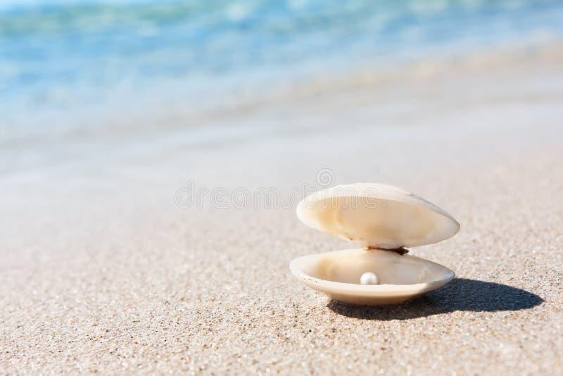 Conchiglia con la perla rosa sulla spiaggia sabbiosa fotografia stock libera da diritti