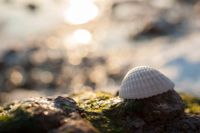 Download Conchiglia Congelata Con Le Alghe Verdi Fotografia Stock - Immagine di acqua, corsa: 56890028