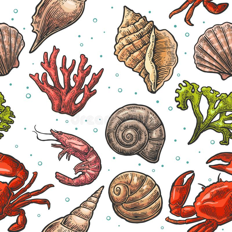 Conchiglia, corallo, granchio e gamberetto senza cuciture del modello Illustrazioni dell'annata dell'incisione di vettore Su fond illustrazione vettoriale