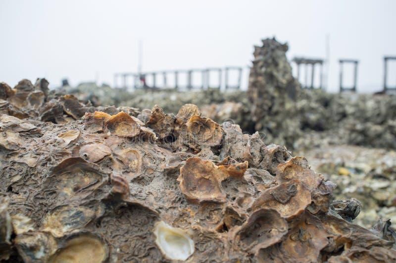 Conchiglia della roccia al fondo della spiaggia immagine stock