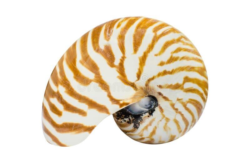 Conchiglia di nautilus a temperatura ambiente fotografia stock libera da diritti