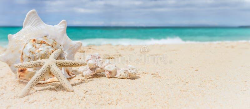 Conchiglia e stelle marine sul fondo tropicale del mare e for Disegni di casa sulla spiaggia tropicale