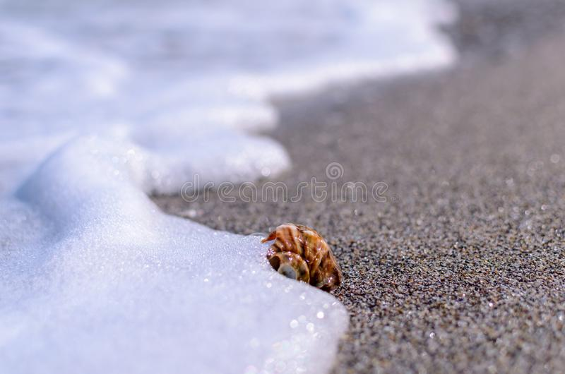Conchiglia nella sabbia fotografia stock libera da diritti