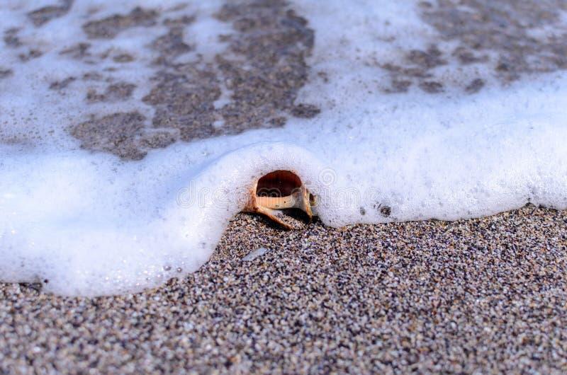 Conchiglia nella sabbia fotografie stock libere da diritti