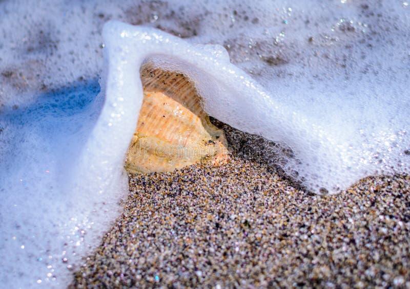 Conchiglia nella sabbia immagini stock libere da diritti