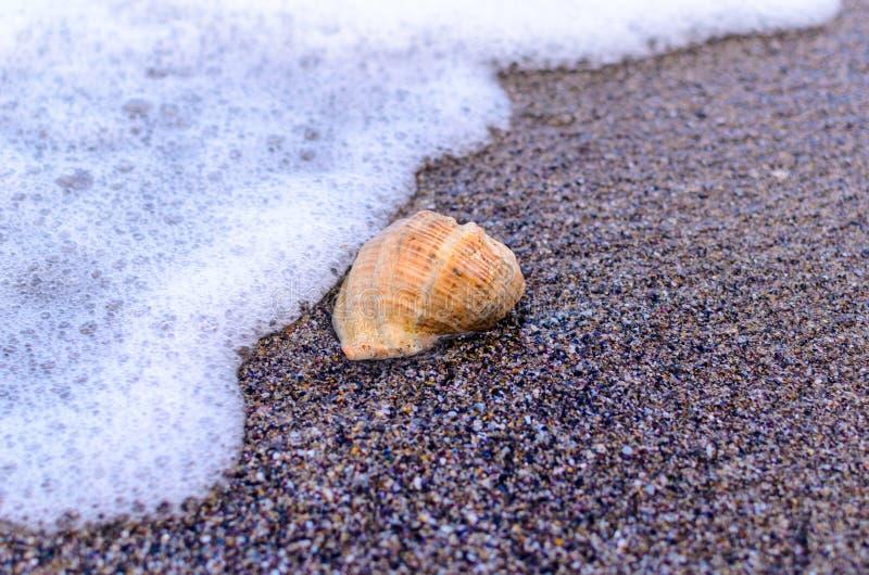 Conchiglia nella sabbia immagine stock