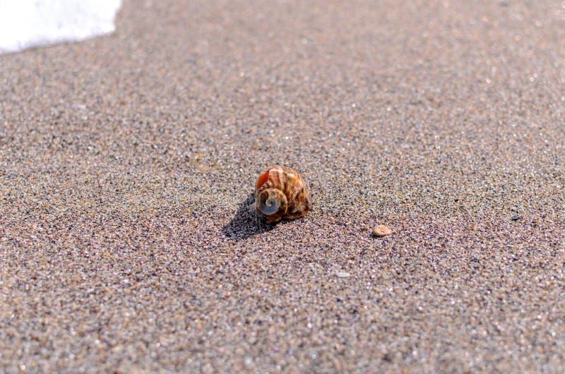Conchiglia nella sabbia immagini stock