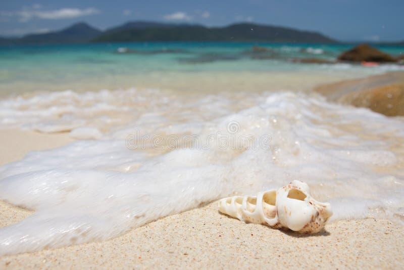 Conchiglia su una spiaggia fotografie stock