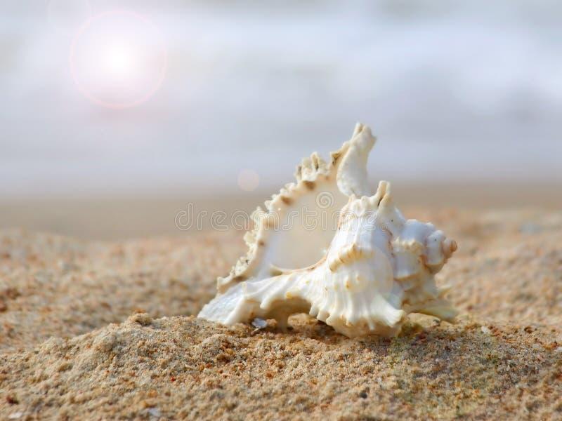 Conchiglia sulla sabbia. immagini stock