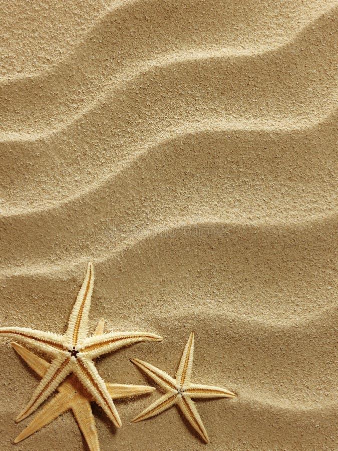Conchiglia sulla sabbia fotografie stock