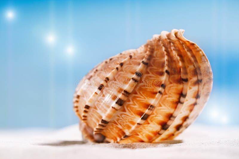 Conchiglia tropicale della conchiglia con l'oceano, la spiaggia e la vista sul mare fotografie stock libere da diritti