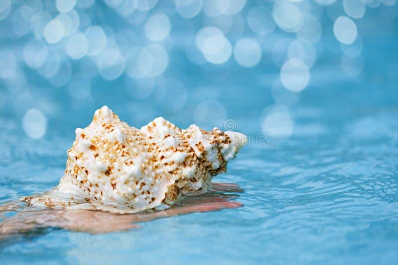 Conchiglia tropicale in mani del bambino con il backgro di cristallo dell'acqua blu fotografie stock libere da diritti