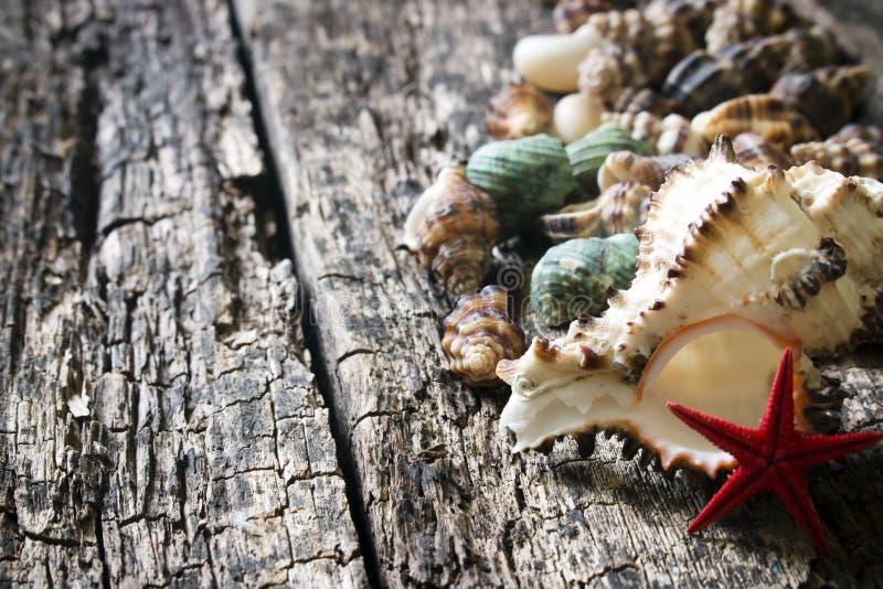 Conchiglie, coperture, crostacei, stelle marine sul fuoco selettivo del primo piano di legno del fondo fotografie stock libere da diritti