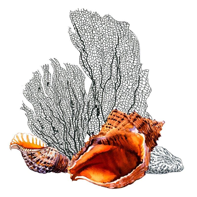 Conchiglie, corallo Composizione marina d'annata in vita di mare, vacanza e concetto di viaggio Illustrazione disegnata a mano de illustrazione di stock
