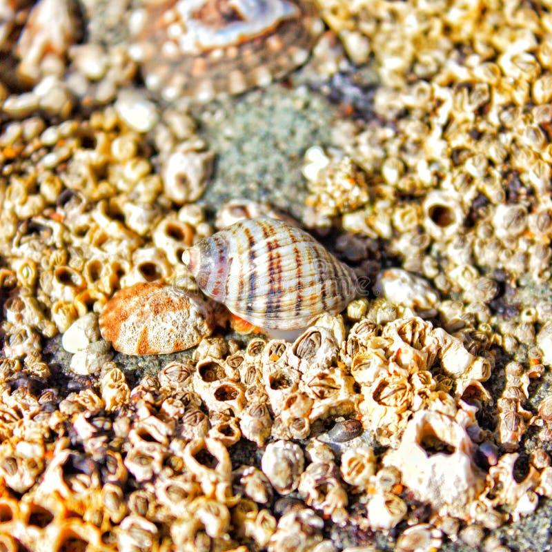 Conchiglie dalla spiaggia immagini stock libere da diritti
