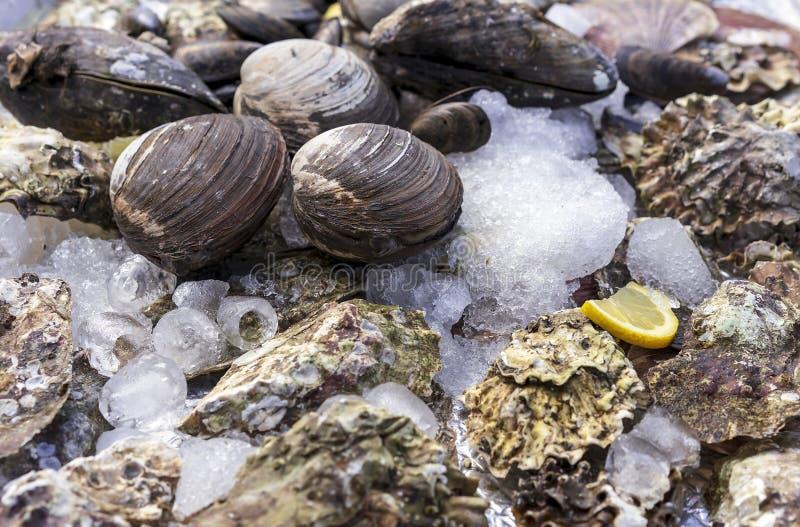 Conchiglie di ostrica con ghiaccio ed il limone sul contatore di un negozio del pesce Ostriche da vendere al mercato dei frutti d fotografia stock