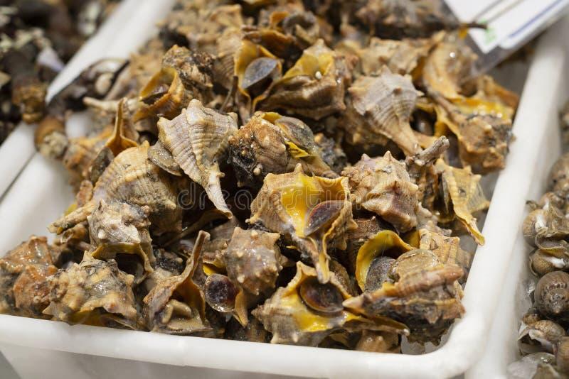 Conchiglie di strombo della lumaca di mar Mediterraneo, canailla tradizionale dei frutti di mare nello Spagnolo immagini stock